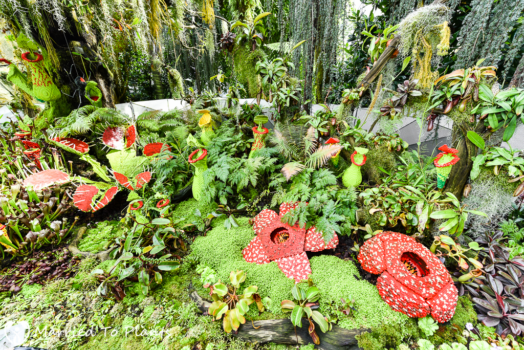Gardens by the Bay Cloud Forest Nepenthes