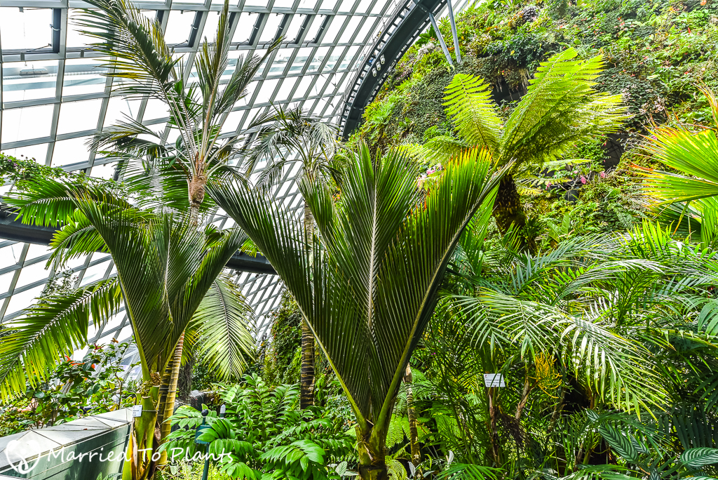 Gardens by the Bay Cloud Forest Rhopalostylis sapida