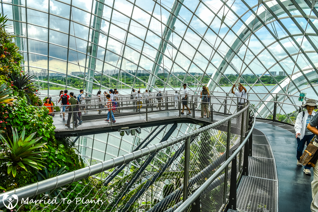 Gardens by the Bay Cloud Forest Sky Walk