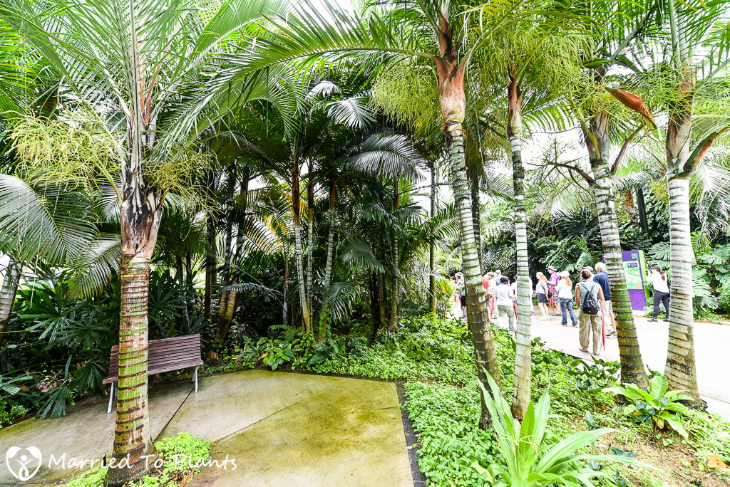 Gardens by the Bay Dypsis Hybrids