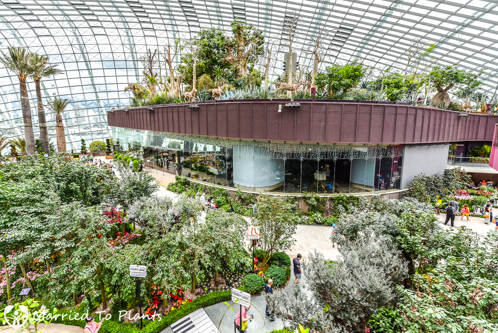 Gardens By The Bay Flower Dome