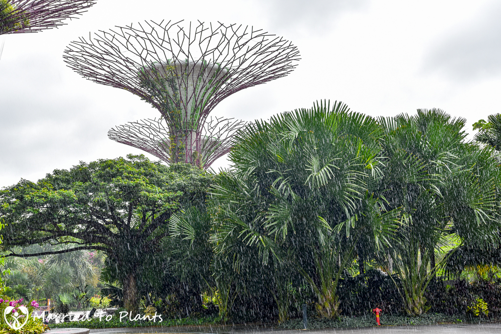 Gardens by the Bay Super Tree in Rain
