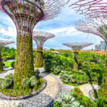Tour of Gardens by the Bay in Singapore