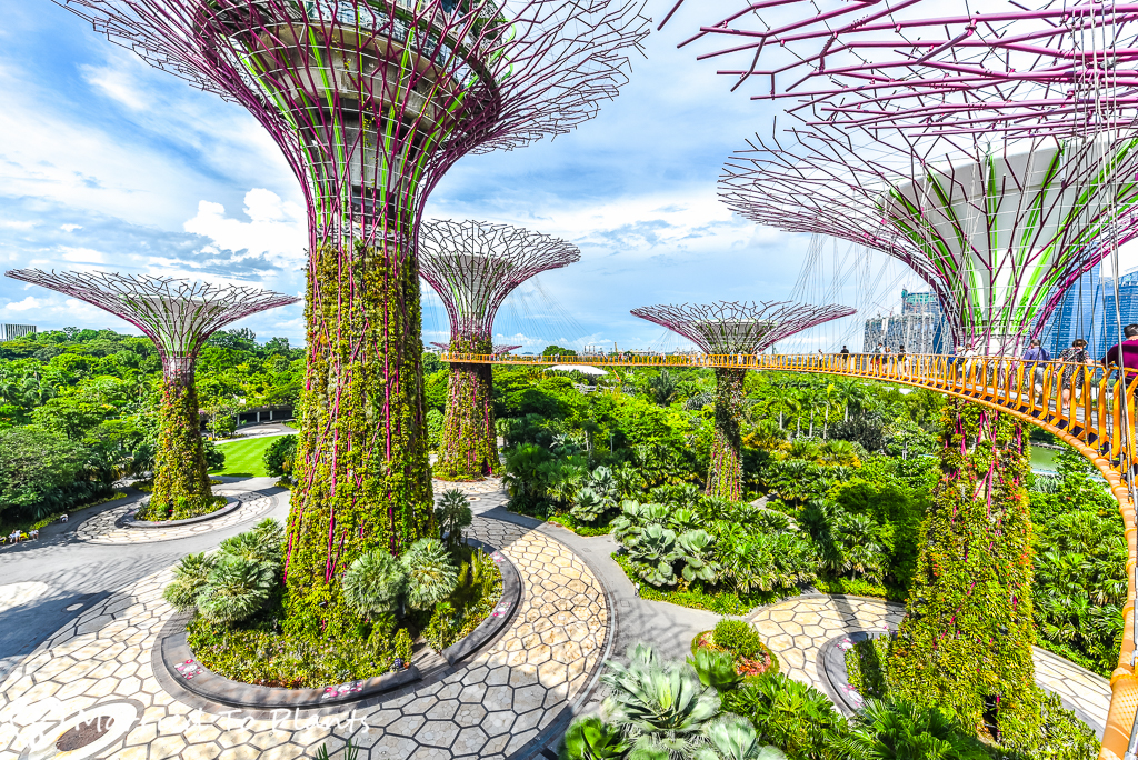 Gardens By The Bay Super Tree Walk