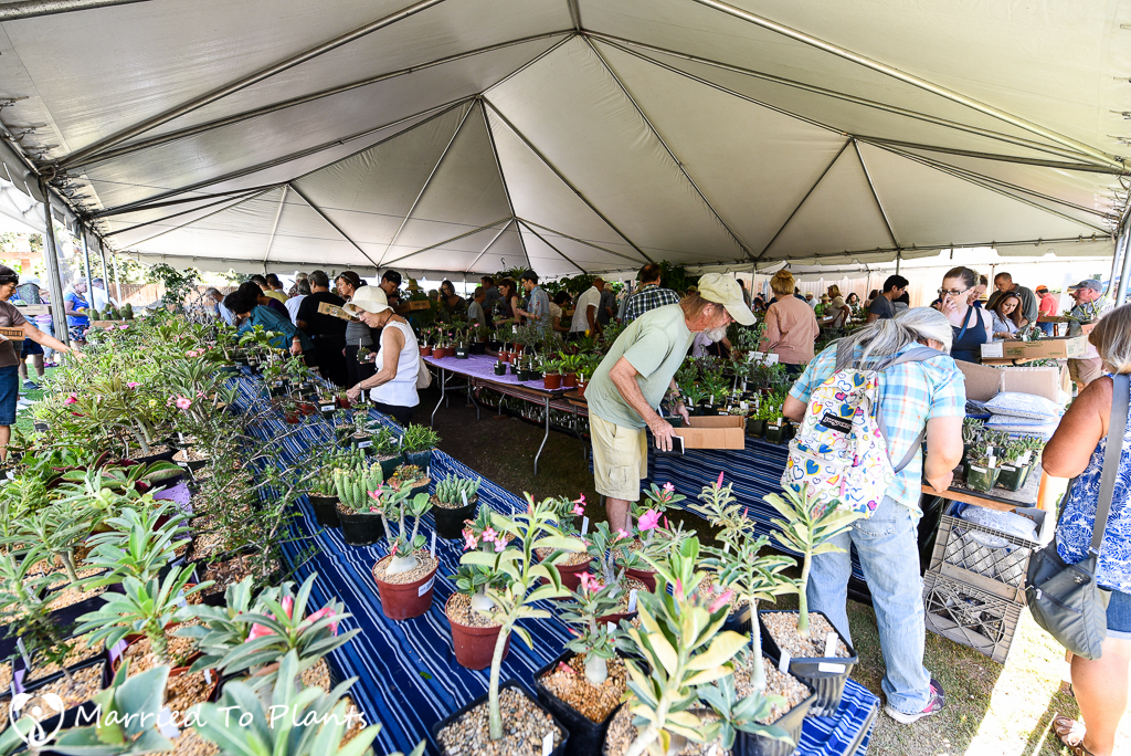 LA Arboretum Intercity Sale Tables 2016