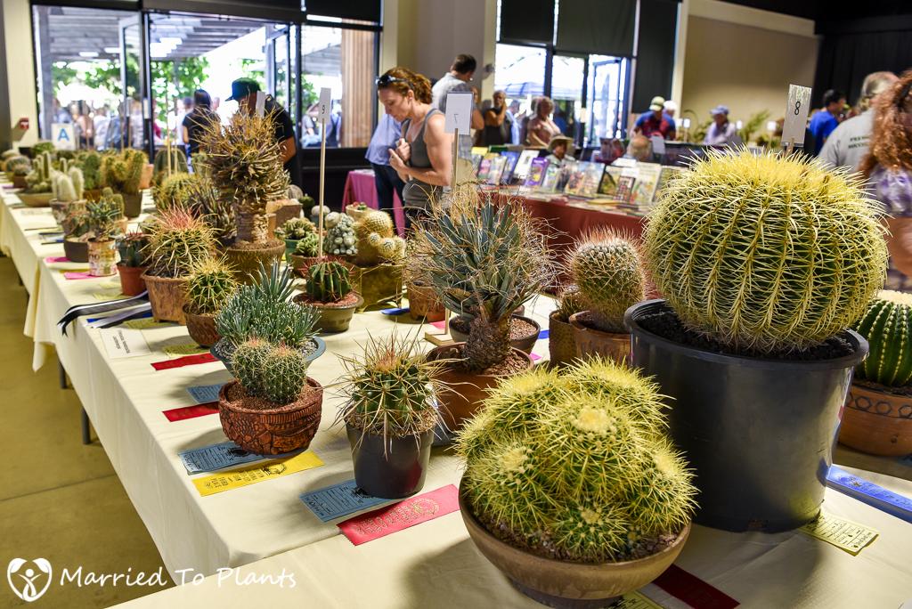 LA Arboretum Intercity Show Tables 2016