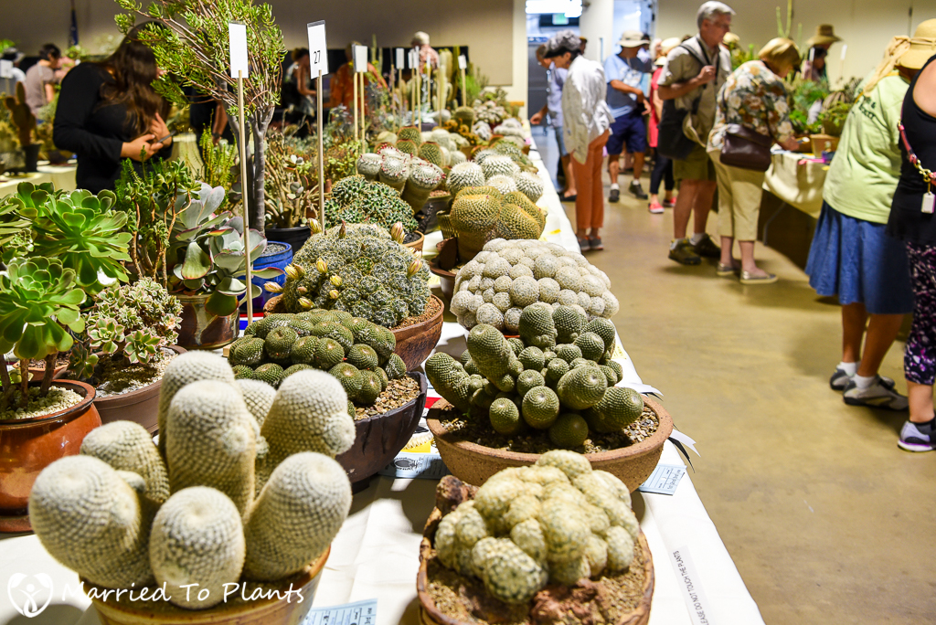 Mammillaria Table - Intercity 2016
