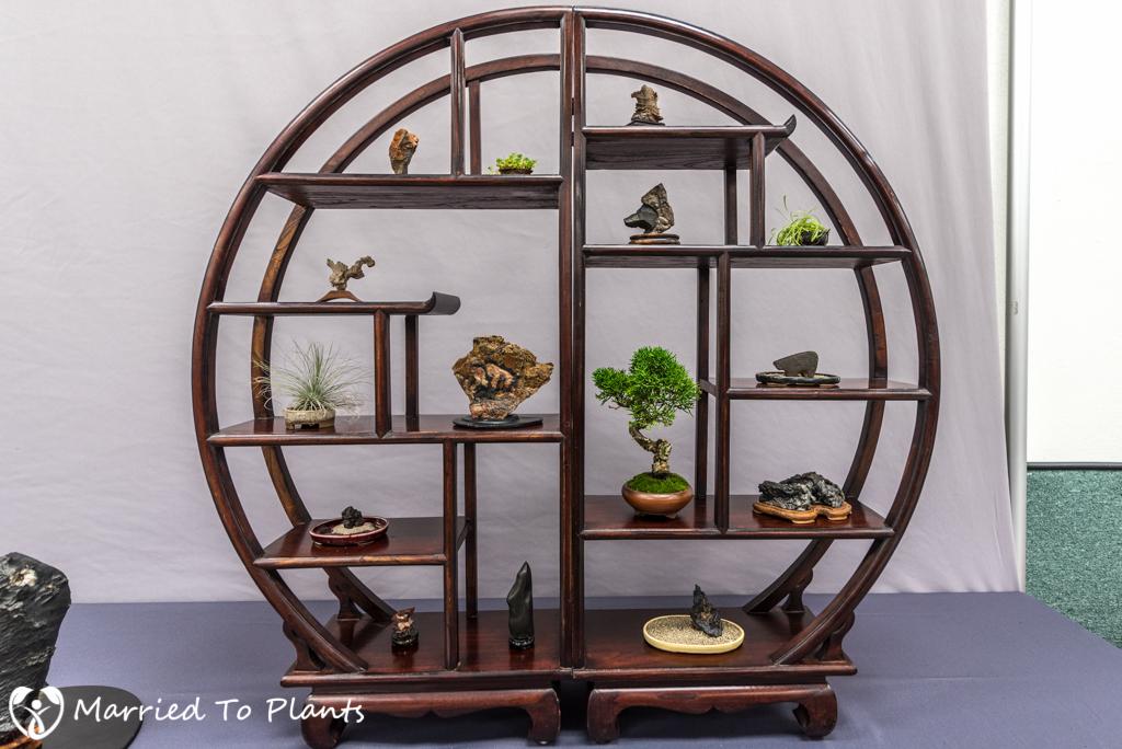 SDBC Exhibition Bonsai Display