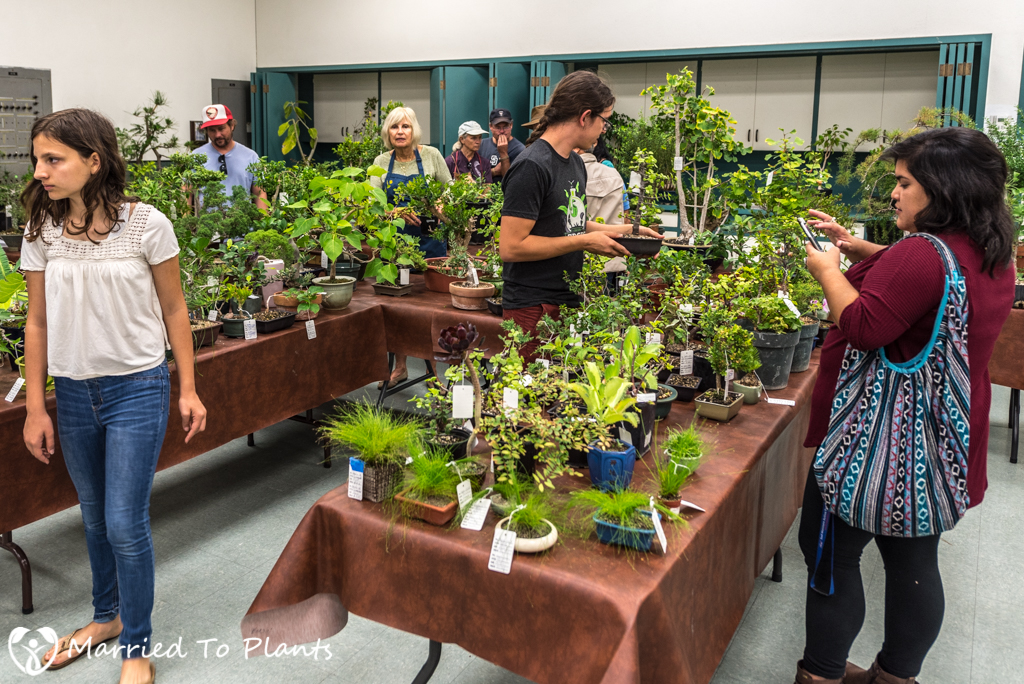 SDBC Exhibition Sale Plants