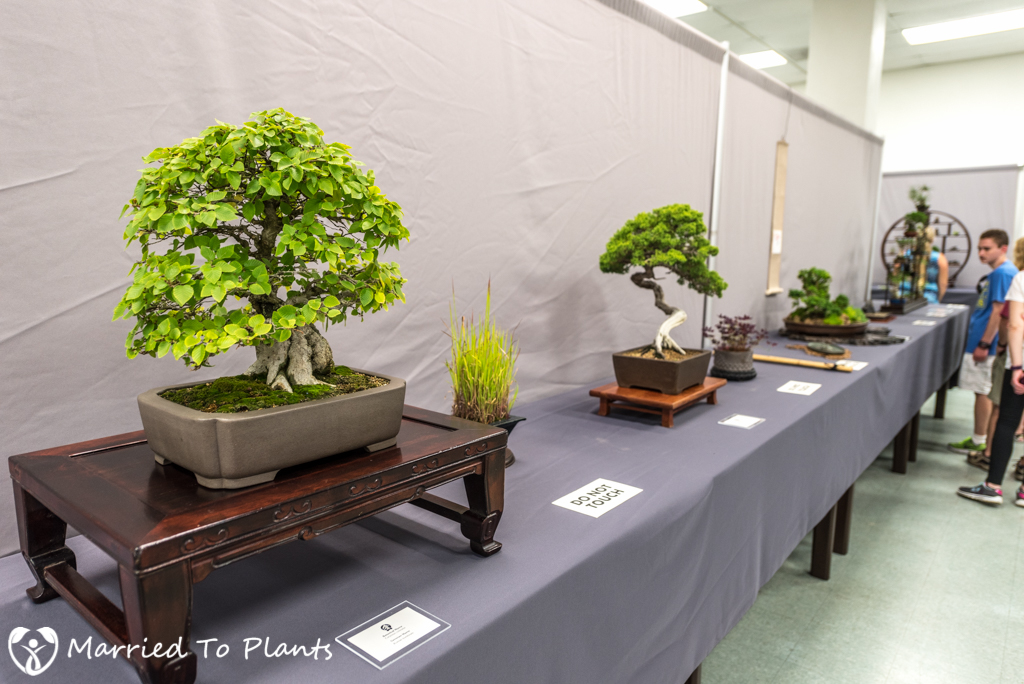 San Diego Bonsai Club 51st Annual Fall Show