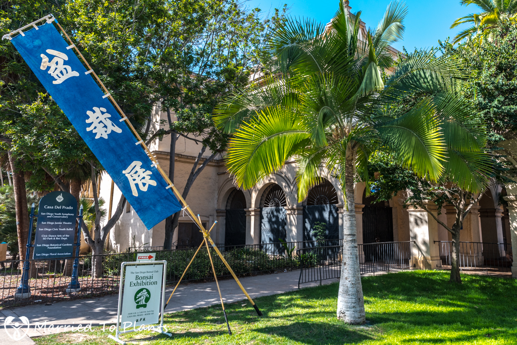 San Diego Bonsai Club 51st Annual Fall Show