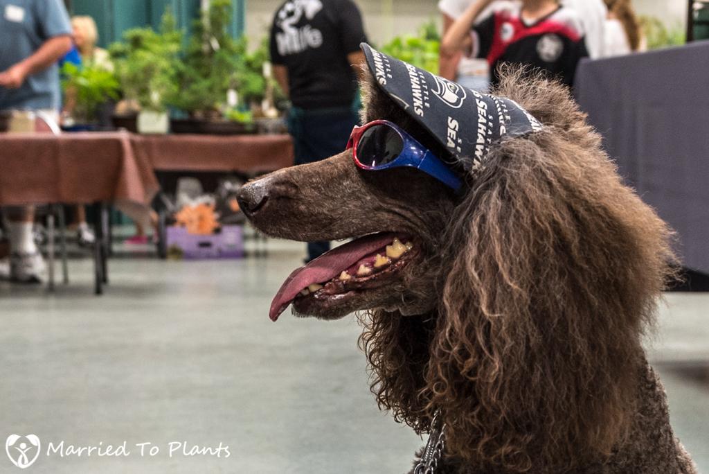 SDBC Exhibition Bonsai Dog