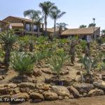 A private Johannesburg Encephalartos cycad garden