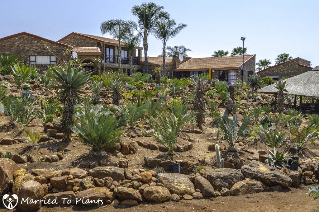 Johannesburg Cycad Encephalartos Garden