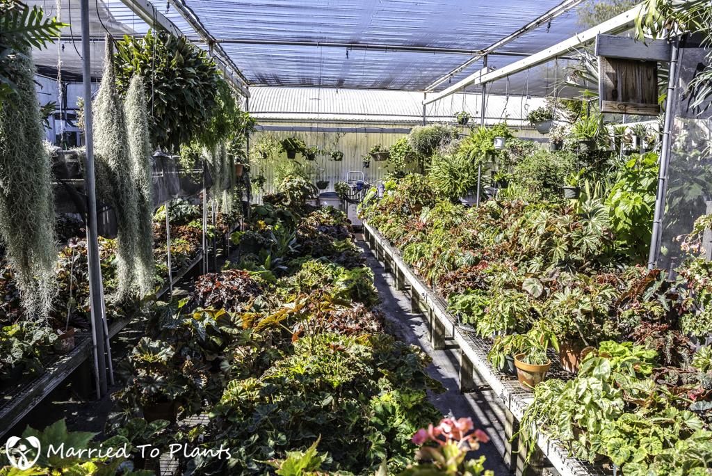 Nakanishi Begonia Shadehouse