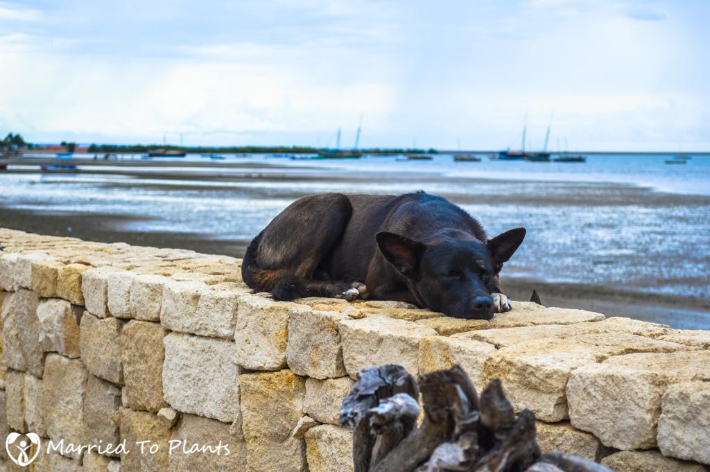 Anakao Dog