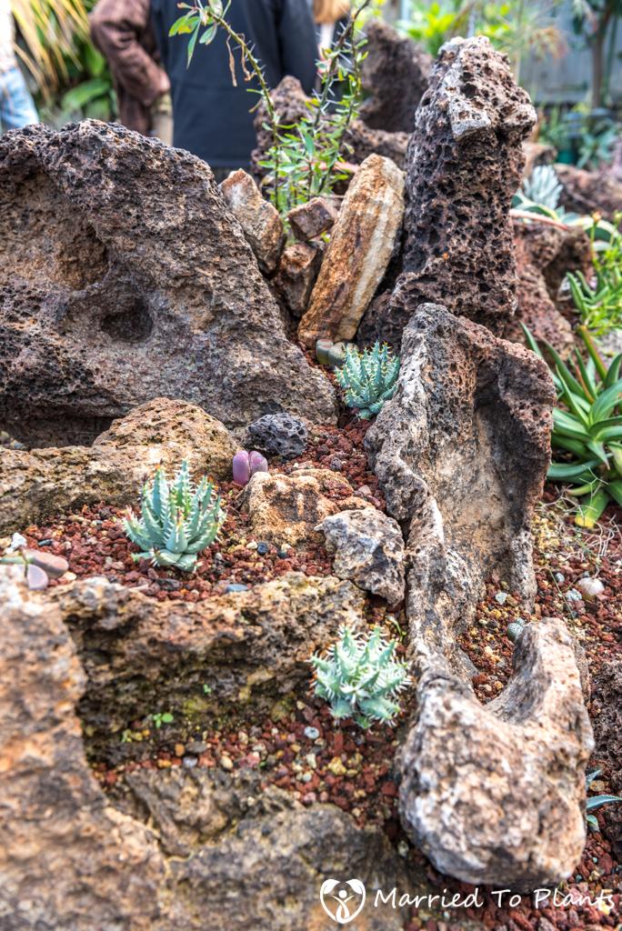 Bjorklund Garden Aloe erinacea
