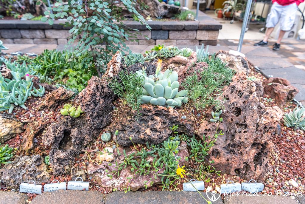 Bjorklund Garden Backyard Plant Displays Detail