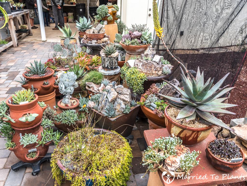 Bjorklund Garden Backyard Pot Display
