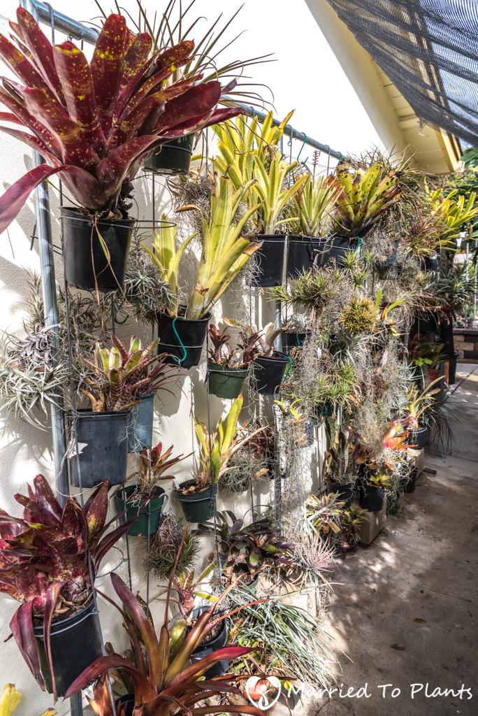 Bjorklund Garden Bromeliads