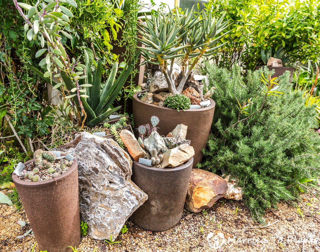 Bjorklund Garden Front Yard Pots