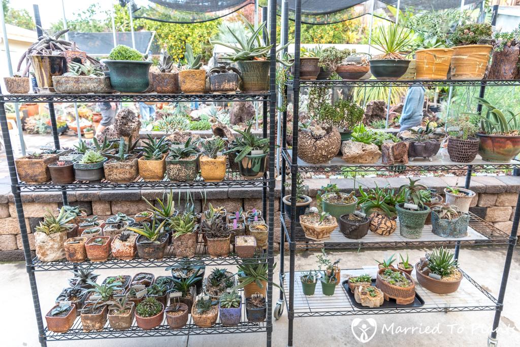Bjorklund Garden Potted Plant Display