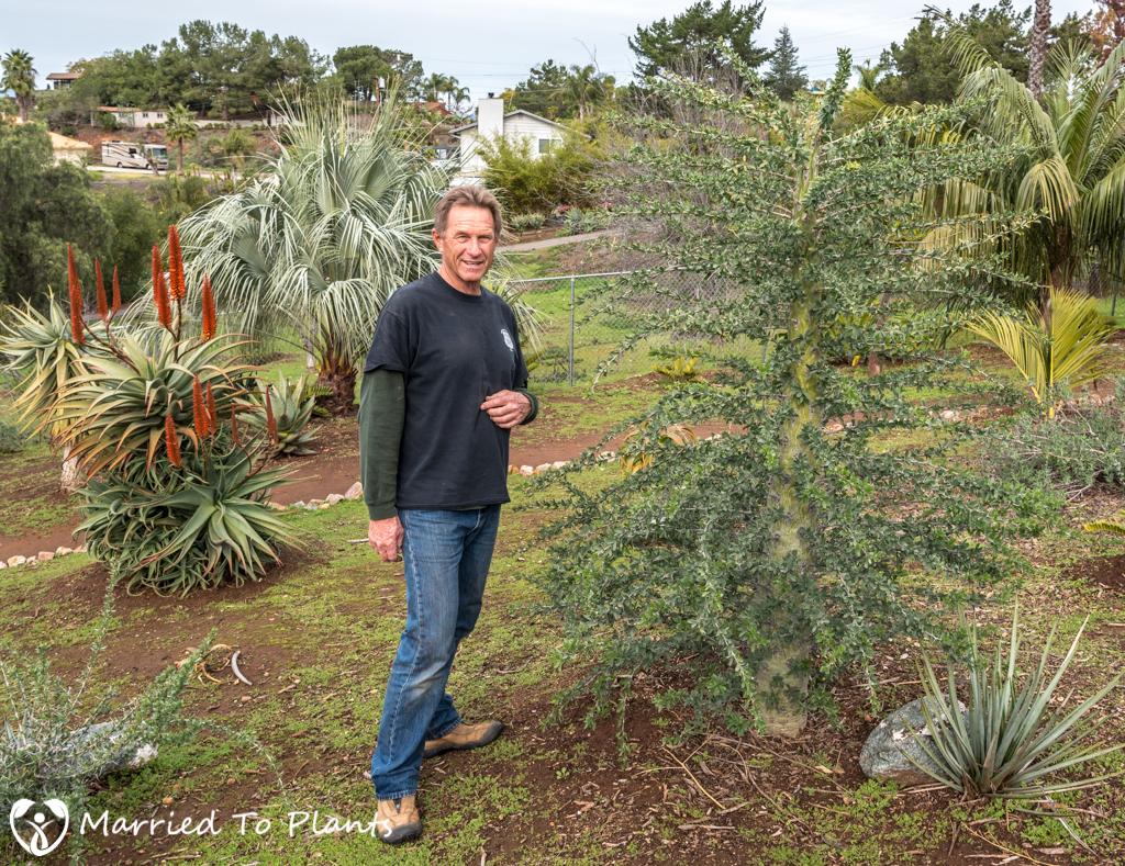 Boojum tree (Idria columnaris)