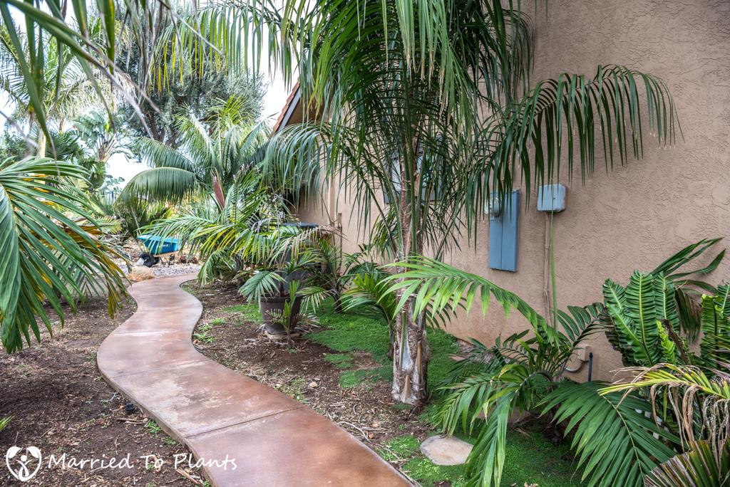 Palms in De Jong Garden