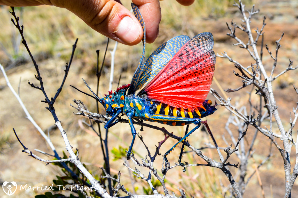 Isalo National Park Rainbow Milkweed Locus