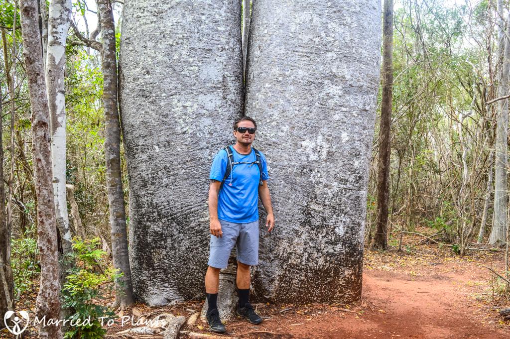 Zombitse-Vohibasia National Park Adansonia za Female
