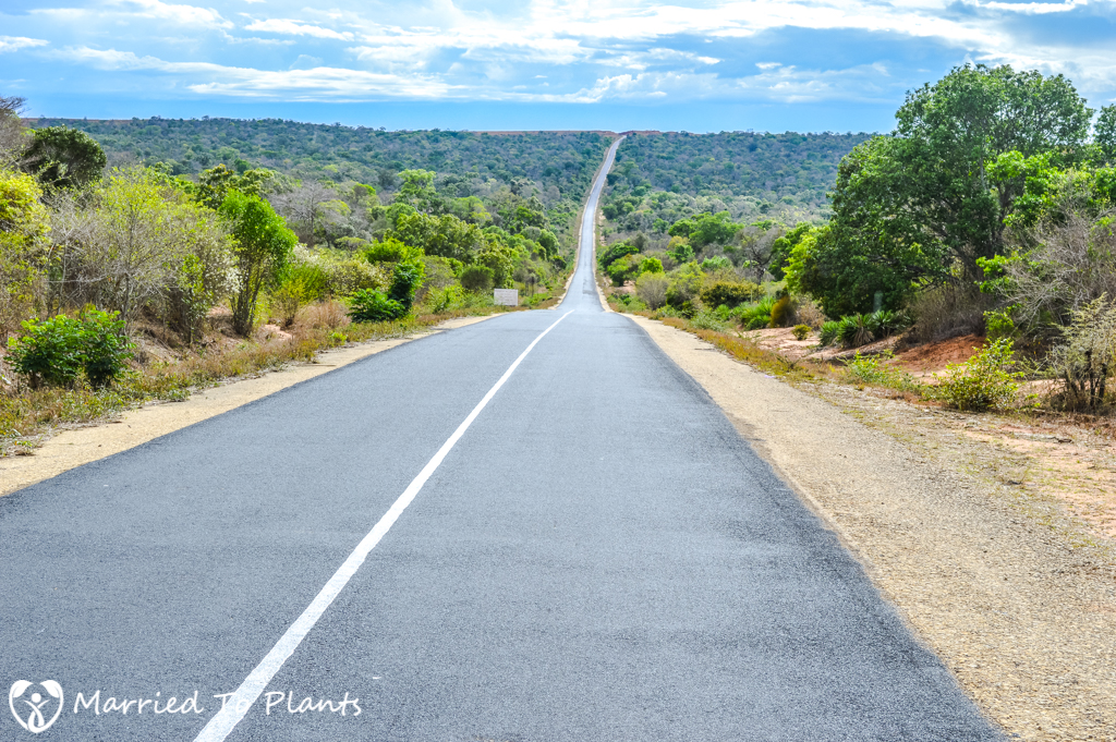 Zombitse-Vohibasia National Park Road