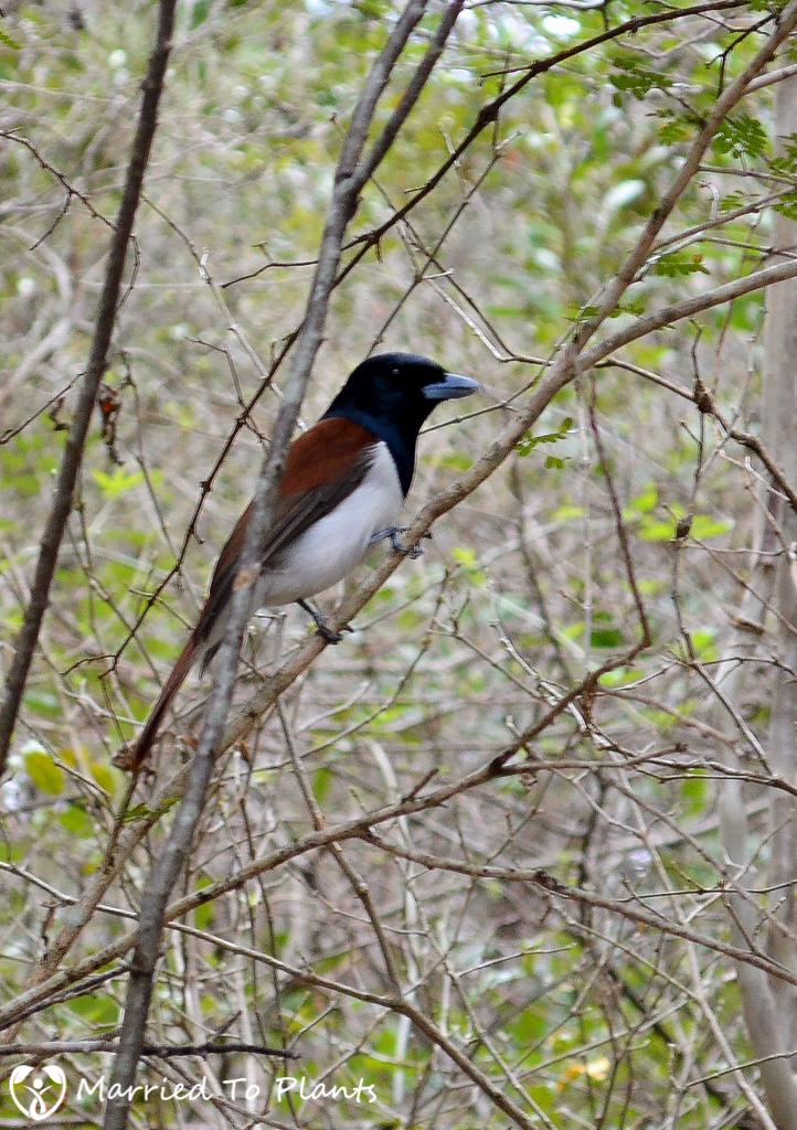 Zombitse-Vohibasia National Park Unknown Bird