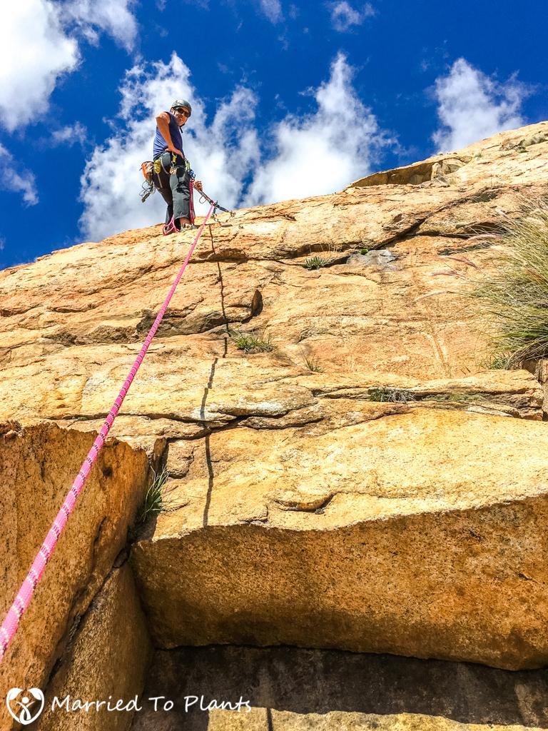 El Cajon Mountain Dudleya edulis Climber