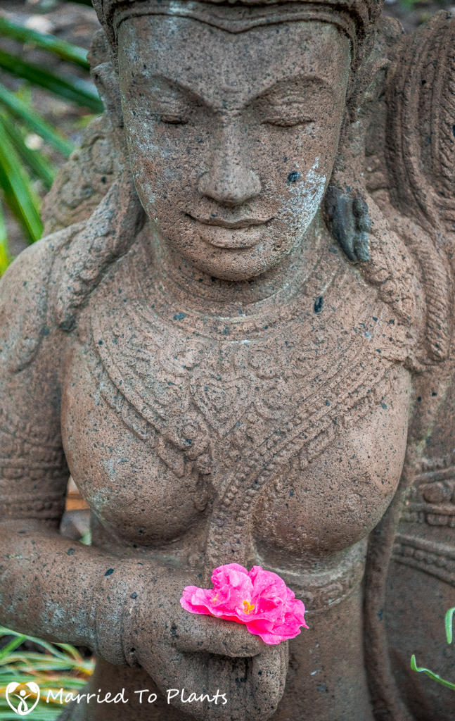 Rainy Day Bali Statue with Camellia Flower