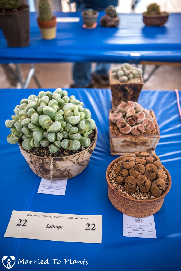 SDCSS Winter 2017 Show - Lithops Table
