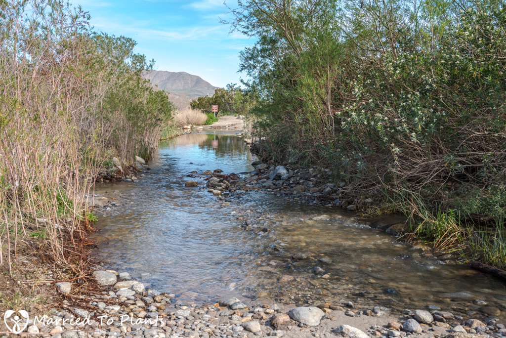 Anza-Borrego Wildflowers - River