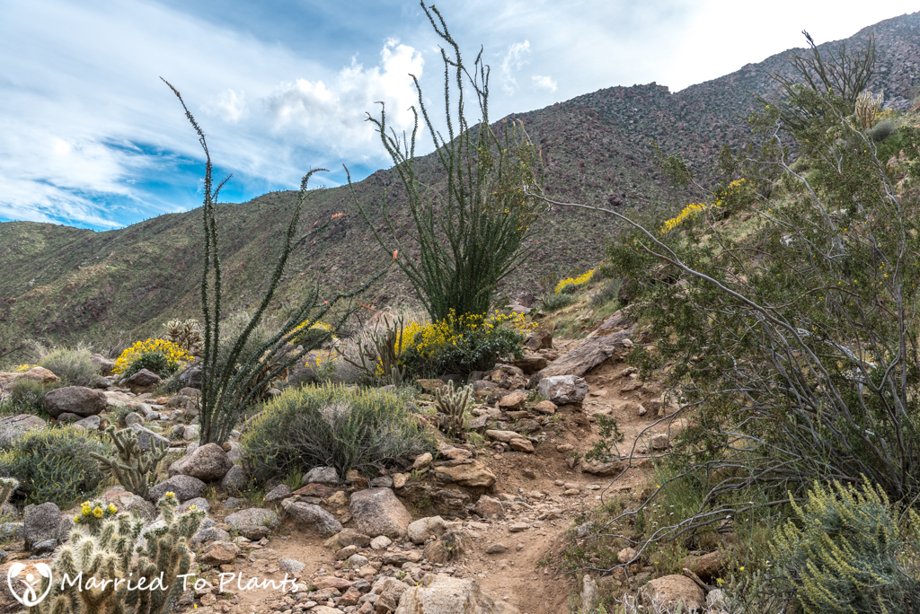 Palm Canyon - Alternative Trail