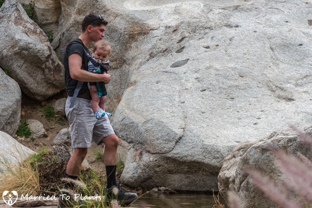 Palm Canyon - Hiker with Baby