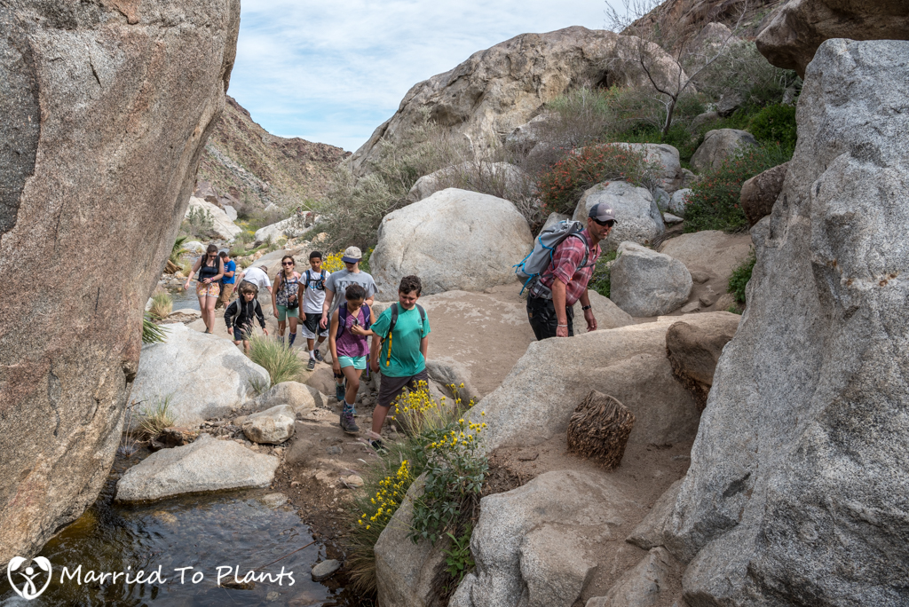 Palm Canyon - Hikers