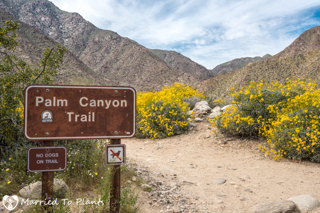 Palm Canyon - Sign