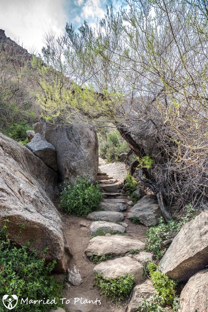 Palm Canyon - Trail Steps