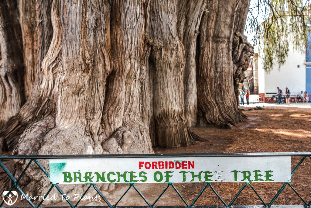 Arbol del Tule Forbidden Sign