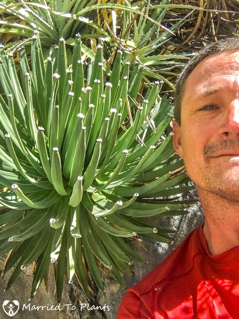 Huasteca Canyon - Agave albopilosa Selfie