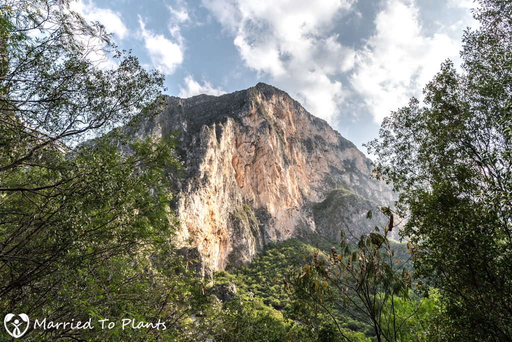 Huasteca Canyon Walls