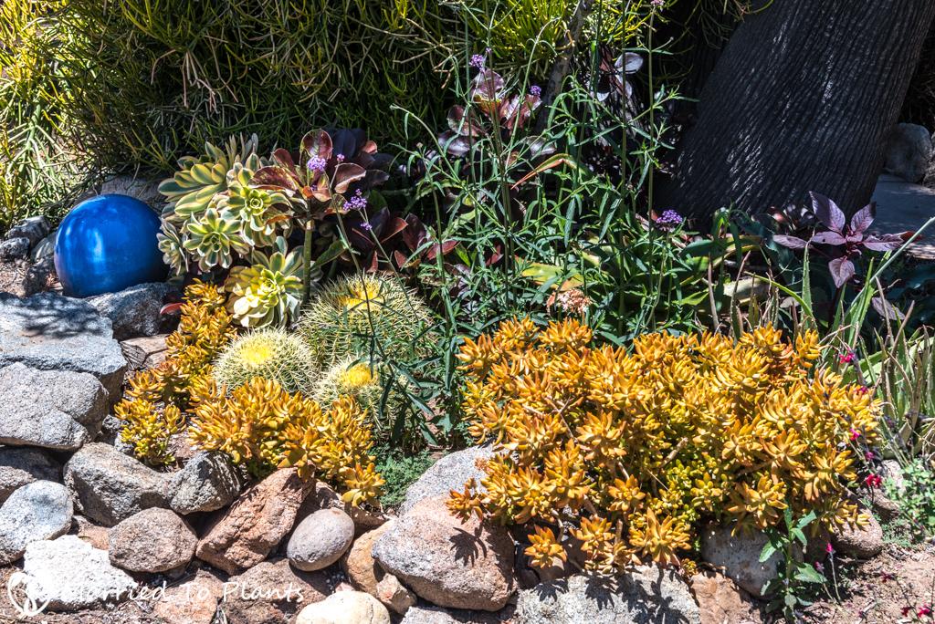 Greg Hamann - Succulent Garden