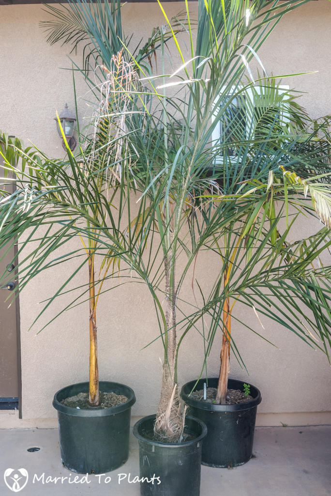 Summer Garden Project - Palm Plantings