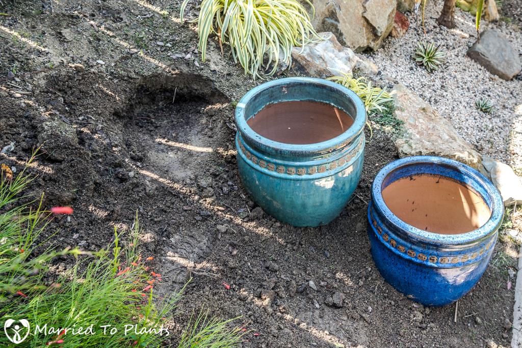 Agave Pots - Placement