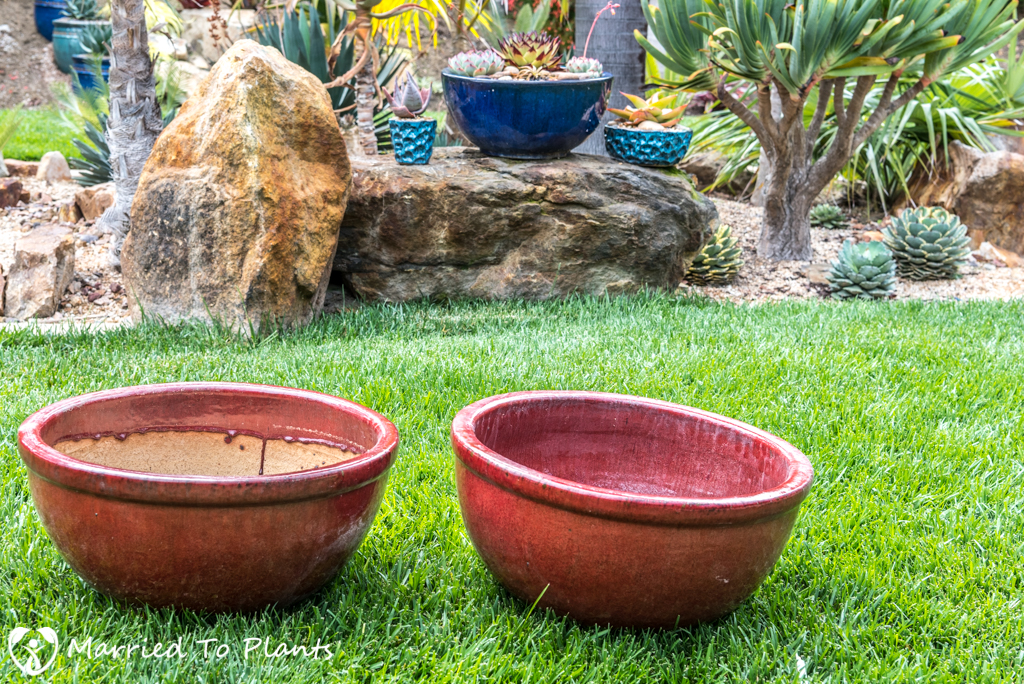 Agave Pots - Red Pots