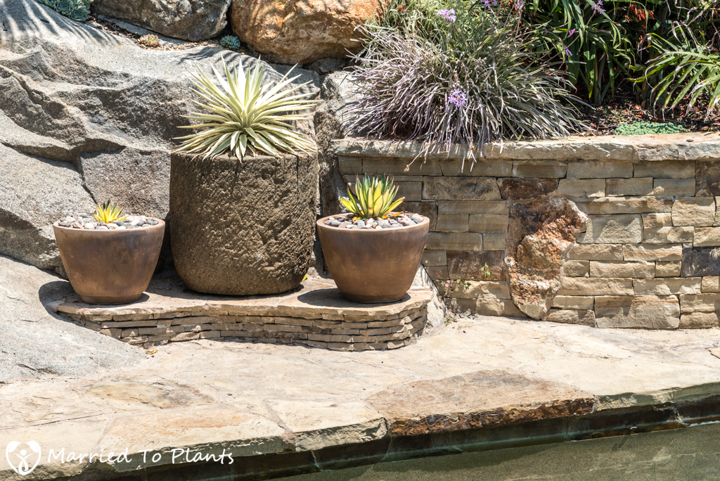 Garden Project Update - Flagstone Pottery Step