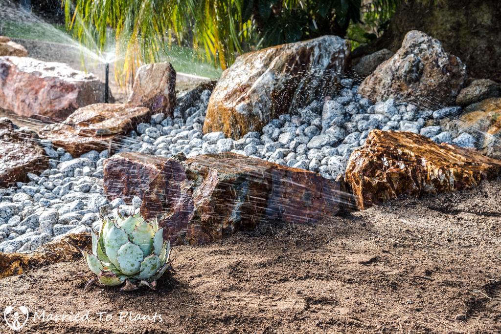 Planter Bed Preparation - Agave guadalajarana